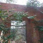 Piney Grove thumbnail image