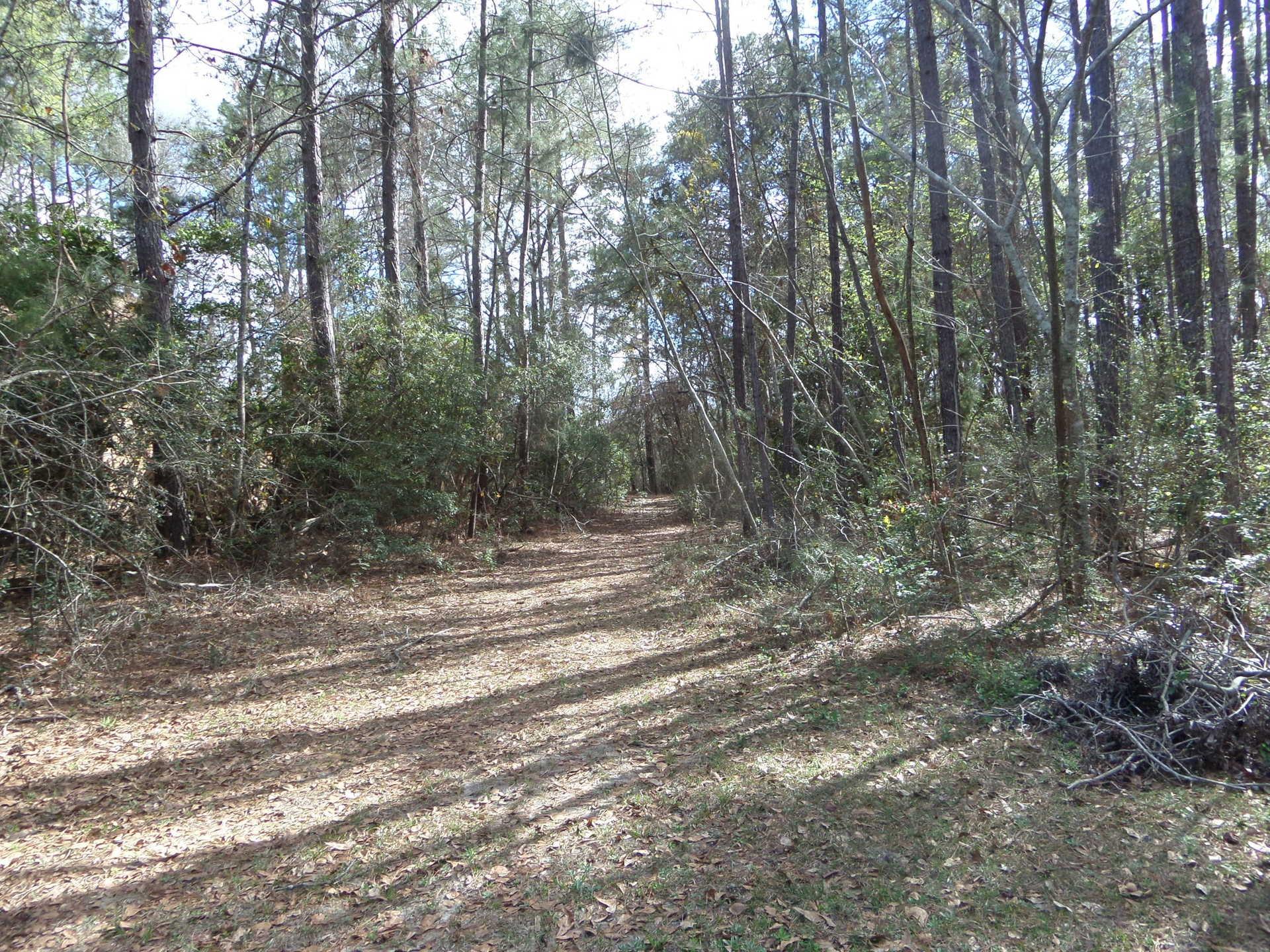 Piney Grove image