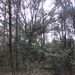 Piney Grove thumbnail image