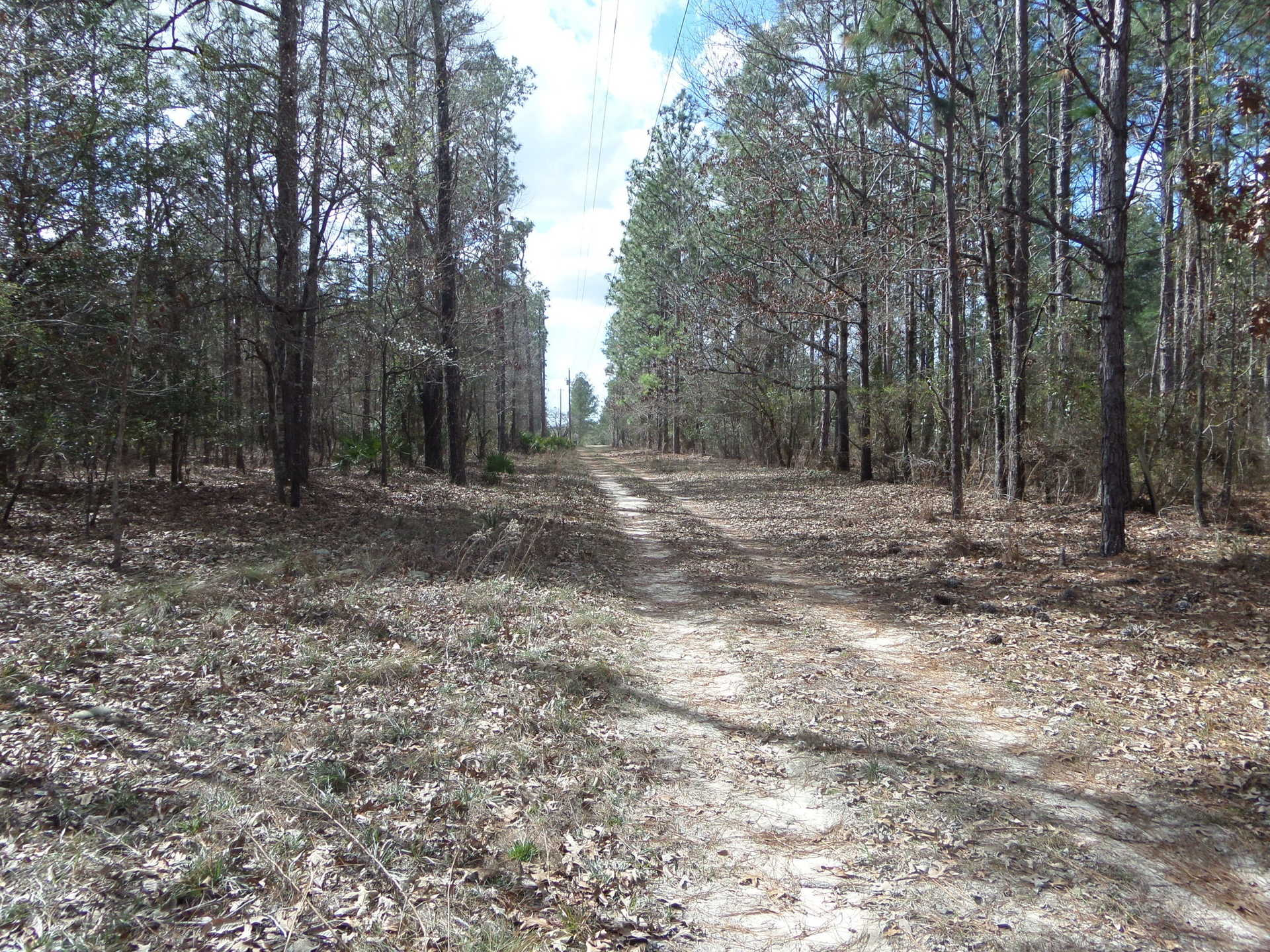 Countryside Homesite at Sandy Run image