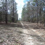 Countryside Homesite at Sandy Run thumbnail image