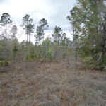 Home or Recreational Retreat on Mineral Springs Rd thumbnail image
