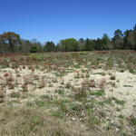 The Hunter's Dream Tract on Spotted Fawn Lane thumbnail image