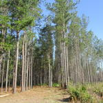 Country Living in Millwood Plantation thumbnail image