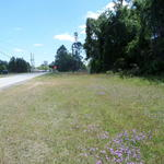 Commercial Lot on West Cherry thumbnail image