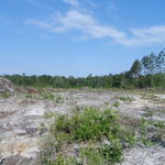 17 Acres Cleared for Homesite thumbnail image