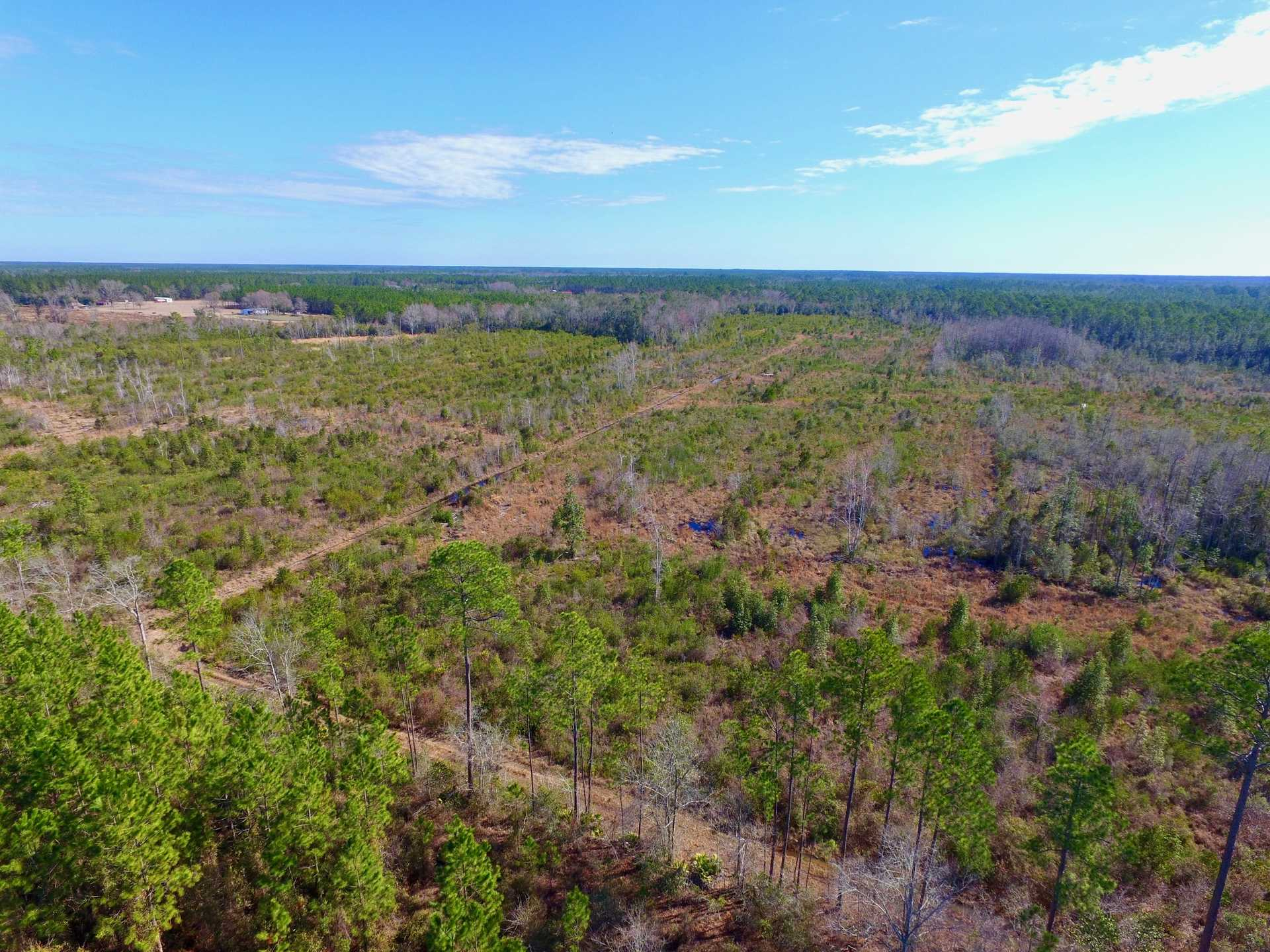 82 Acres Perfect for Huntsmen and Investors! image