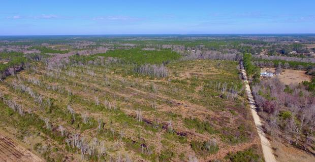 42.58 Acre Investment or homesite image