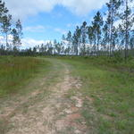 Great Homesite/Timberland on Mt Pleasant Rd thumbnail image