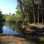 245 Acres Waterfront Deal! thumbnail image