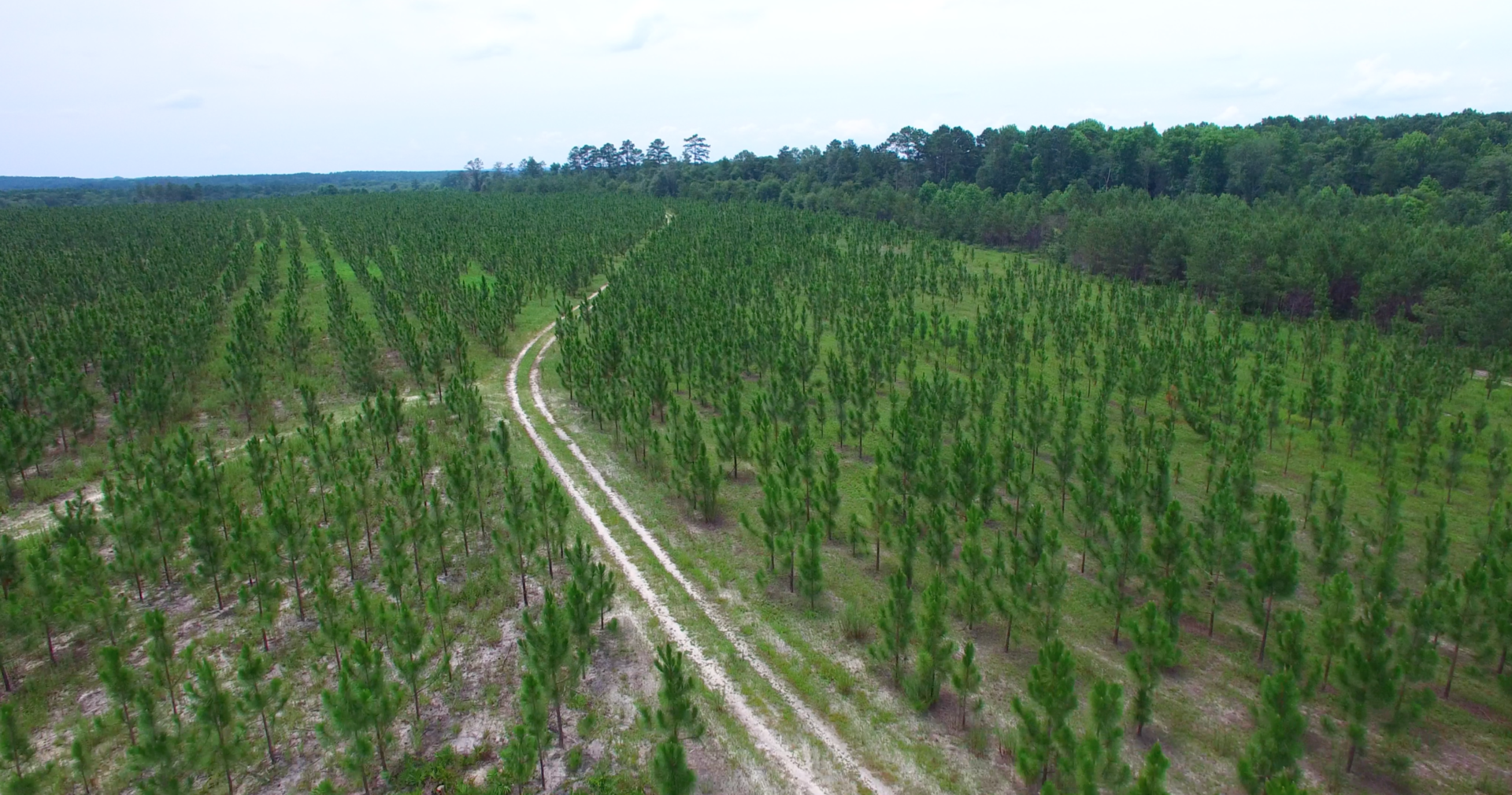 Timberland Tract in Toombs County image
