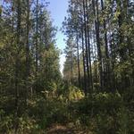 64.34 Acre Outer Hole Creek Tract thumbnail image