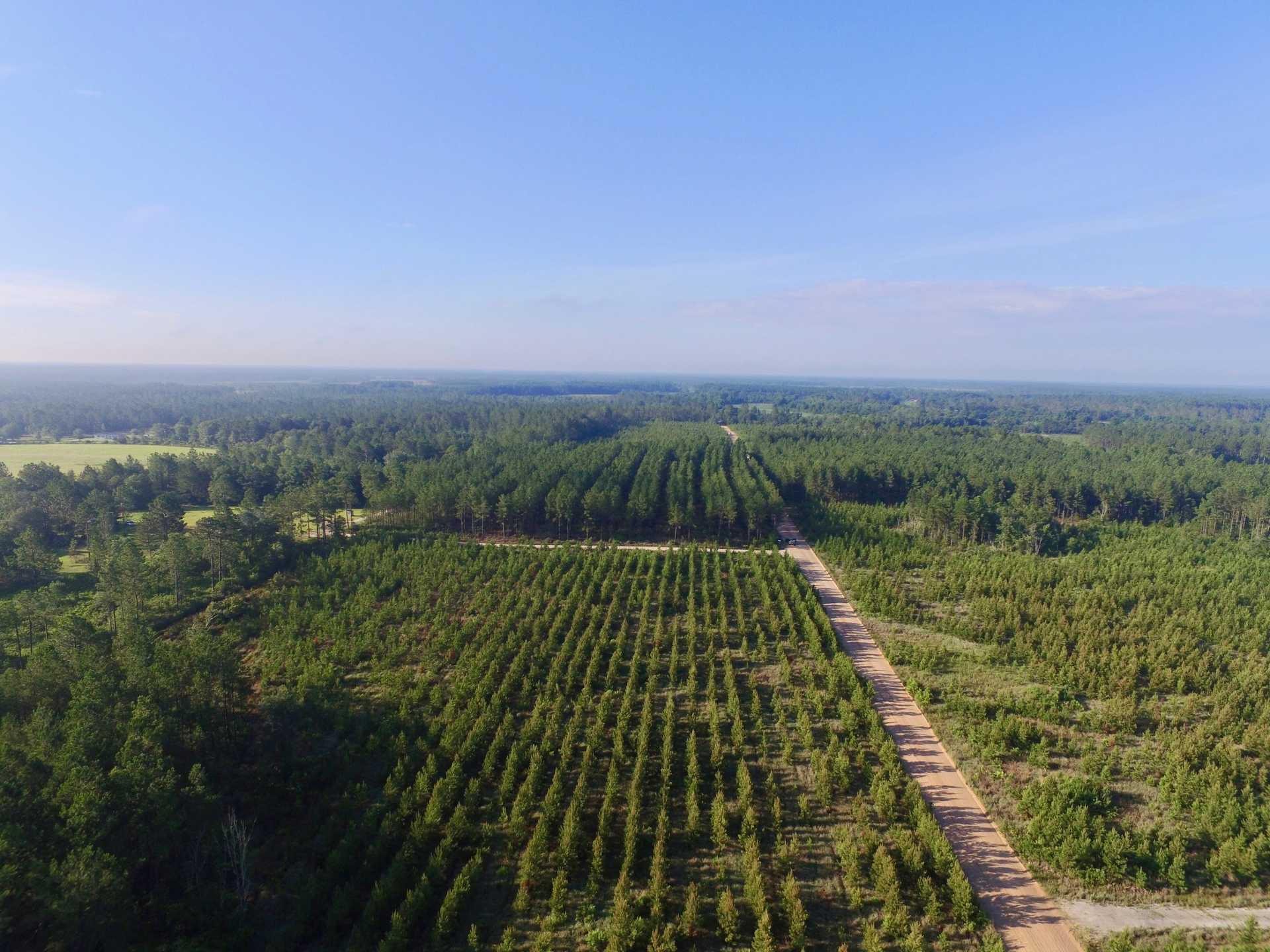 69.44 Acres Pine Plantation Homesite image