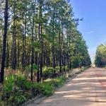 69.44 Acres Pine Plantation Homesite thumbnail image