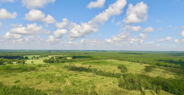 98.21 Acre Horse Creek Rd  image