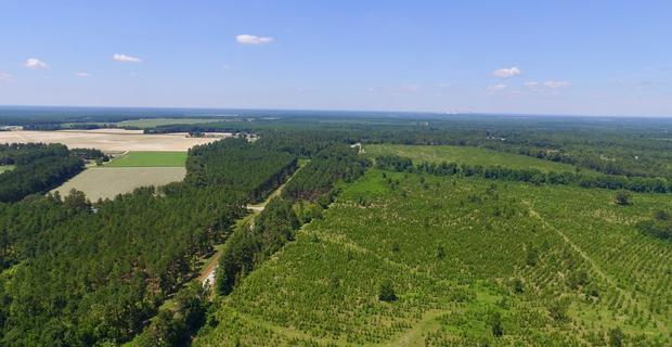 133.47 Acres Burke County, GA image