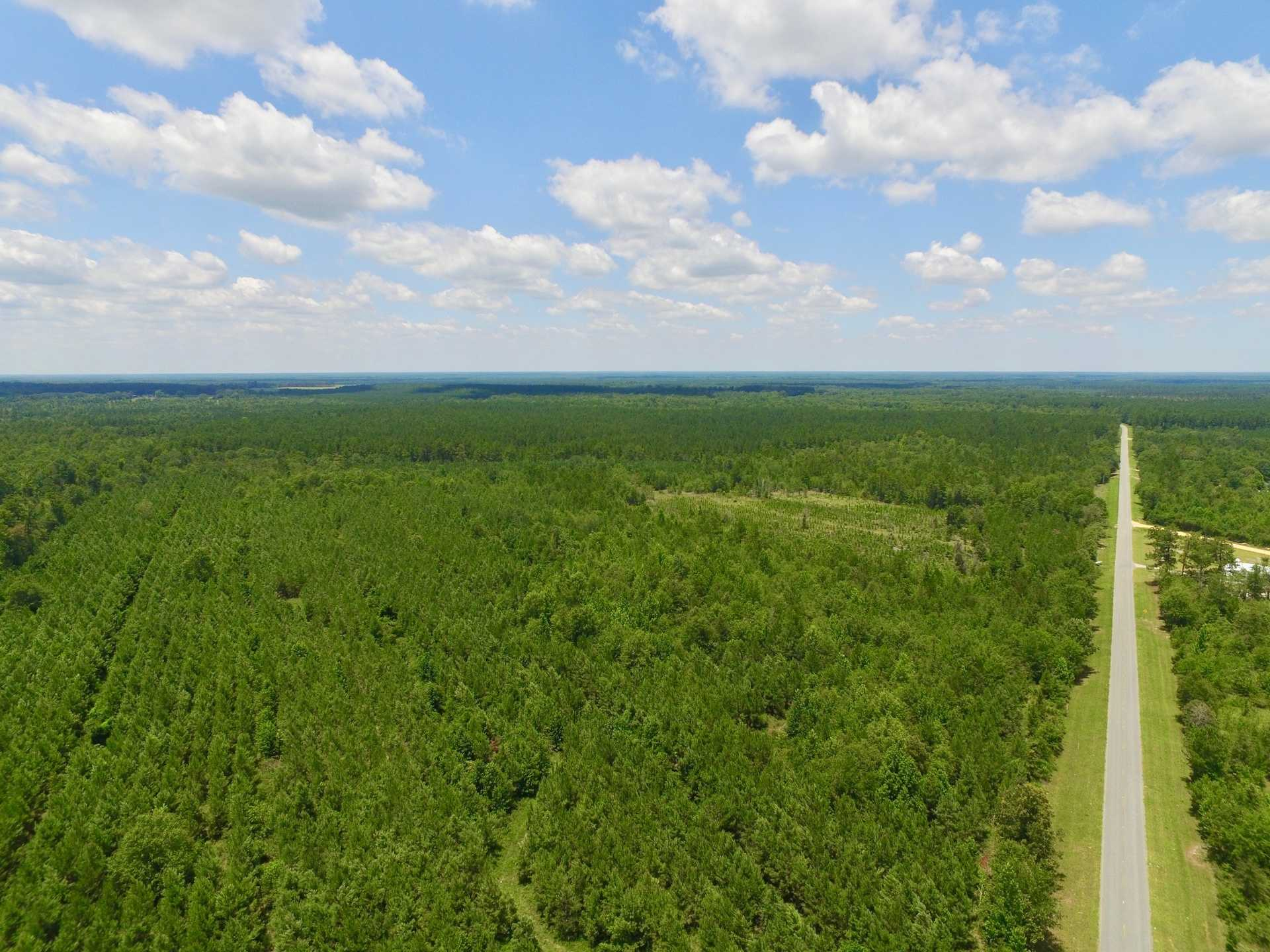 53 Acre Pine Wood Tract image