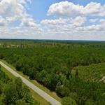 51 Acre Pine Wood Tract thumbnail image