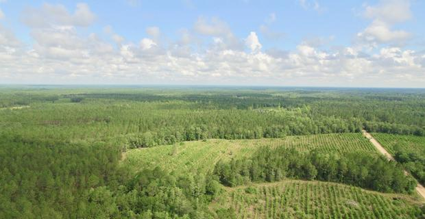 381 Acre Recreational/Hunting Tract image