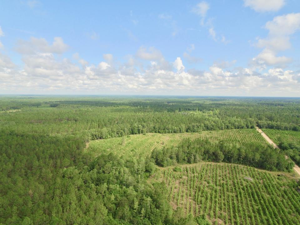 381 Acre Recreational/Hunting Tract main image
