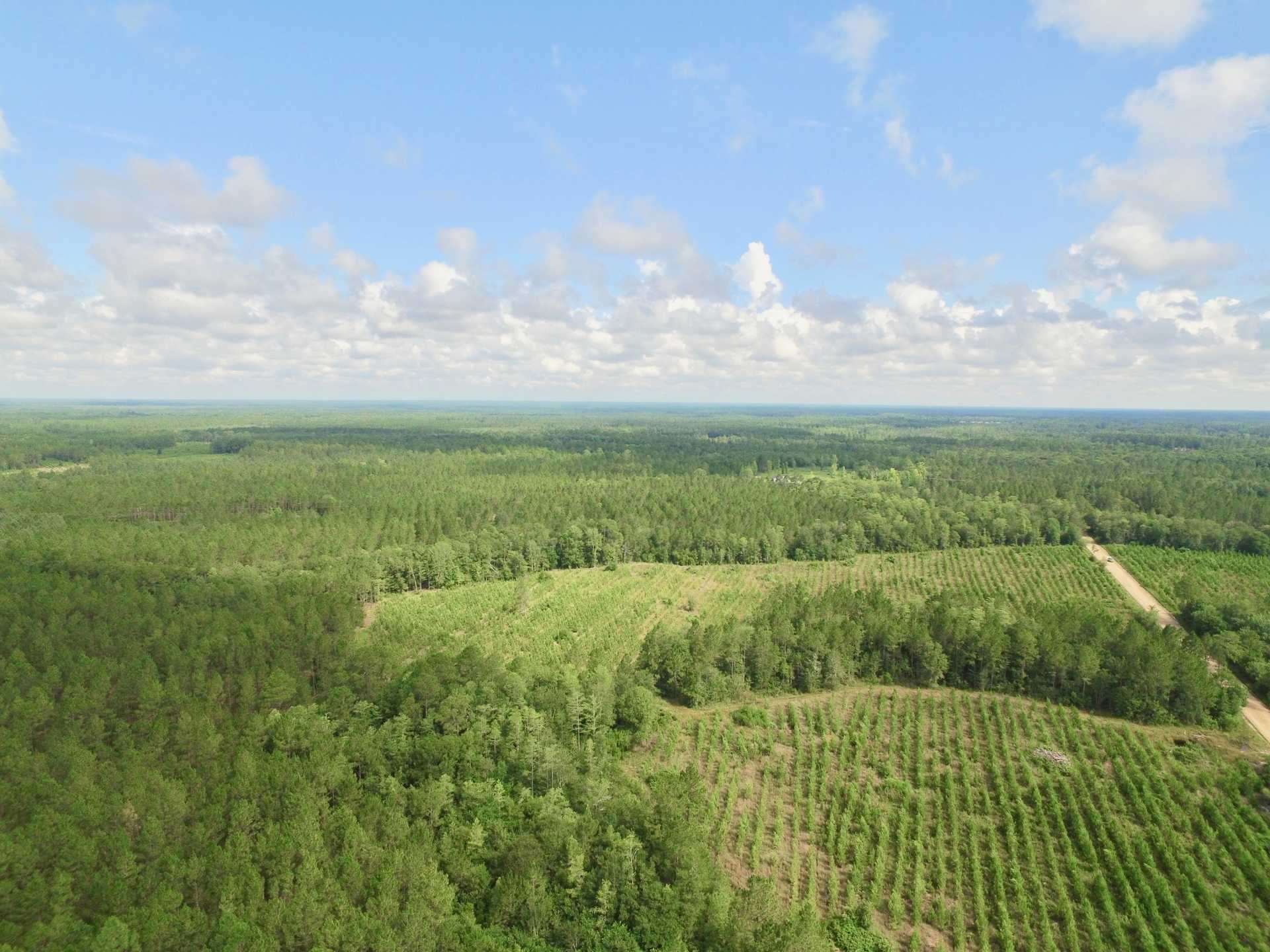 381 Acres in Long County, GA image