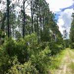 381 Acre Recreational/Hunting Tract thumbnail image