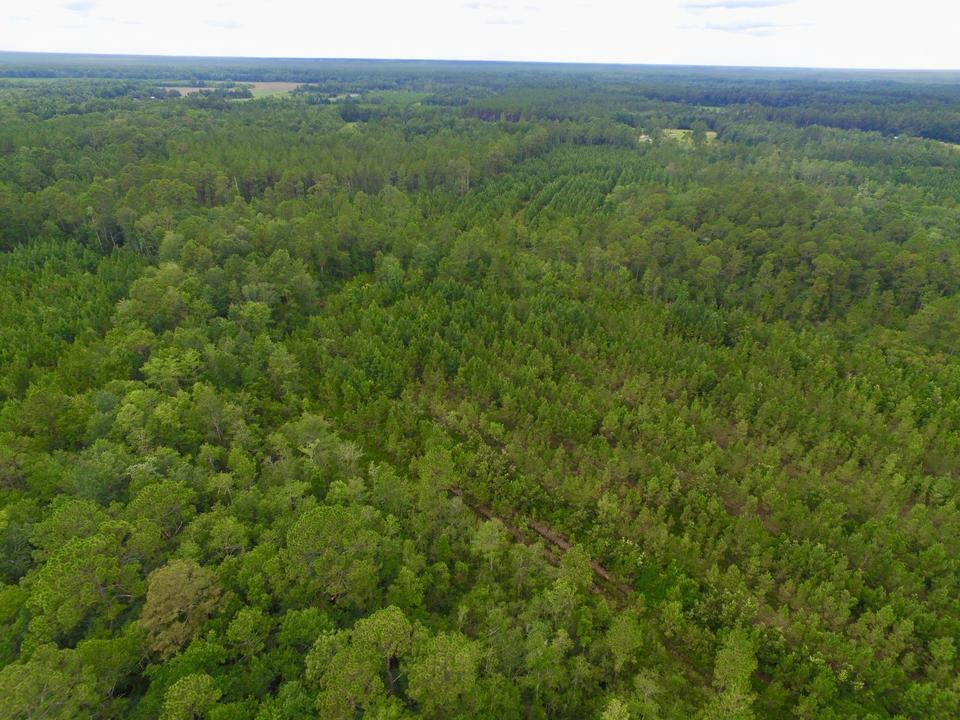 69.54 Acre Monticello Rd Tract main image
