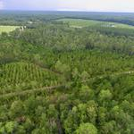 69.54 Acre Monticello Rd Tract thumbnail image
