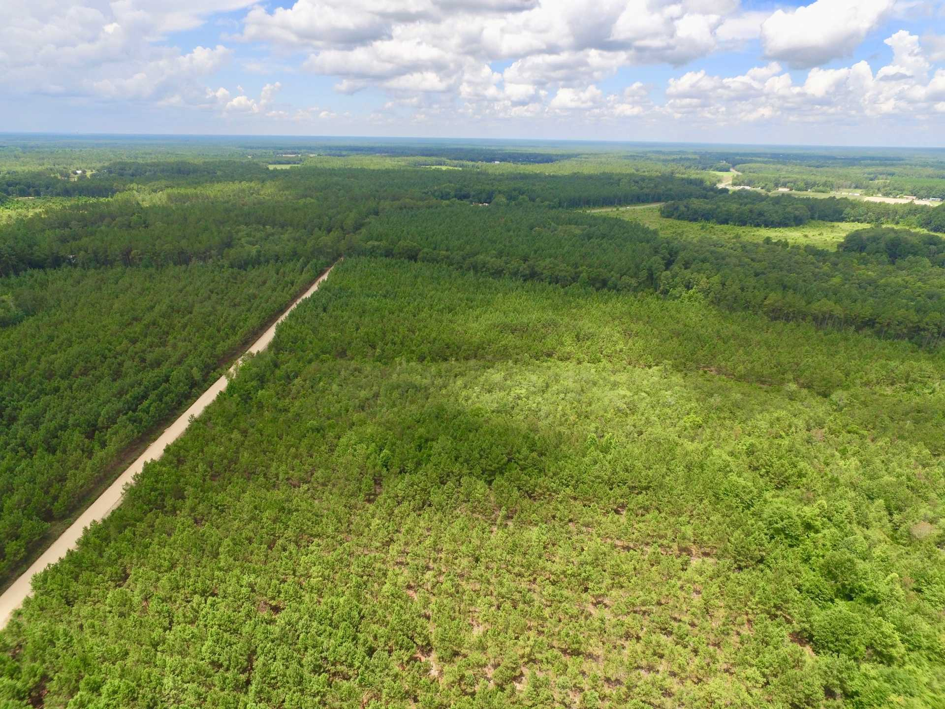 64+ Acre Pine and Timberland Tract image