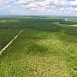 64.94 Acre Hinesville Tract thumbnail image