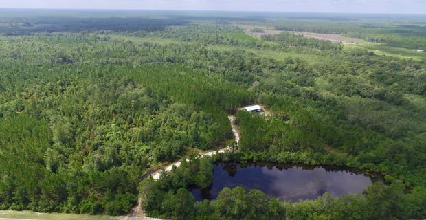 420 Acres  Suwanoochee Buck Plantation image
