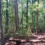 420 Acres  Suwanoochee Creek Plantation thumbnail image