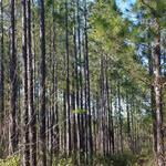 742 +/-  acre Hunting & Timber Property thumbnail image