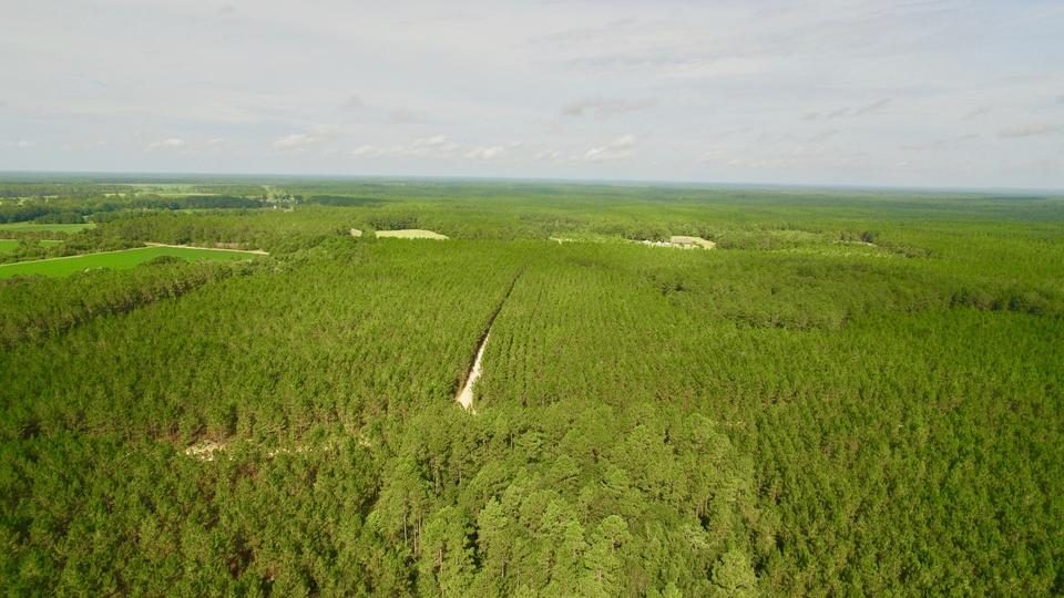 742 +/-  acre Hunting & Timber Property image