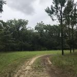85 Acres with Cabin In Big Buck Country thumbnail image