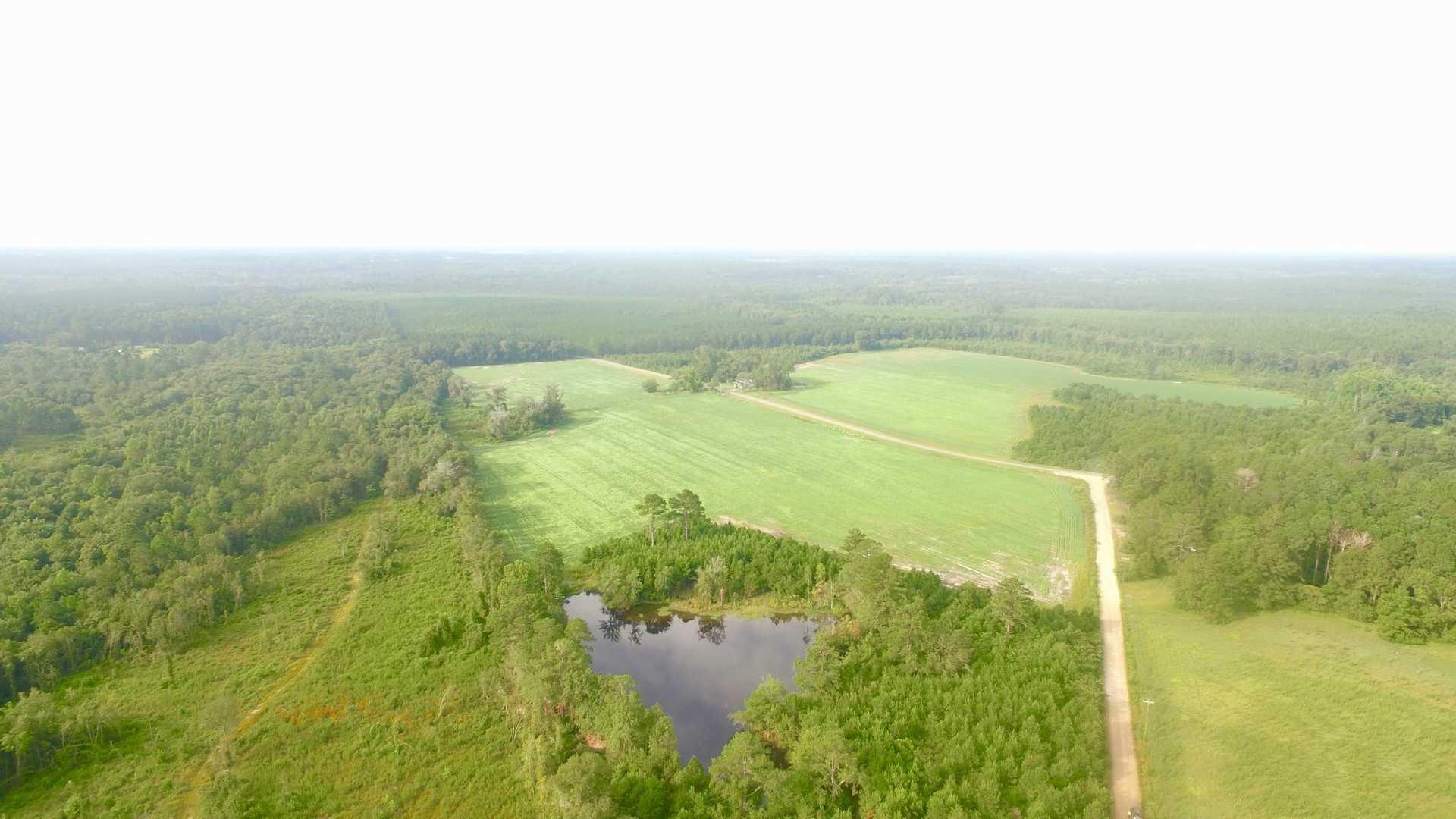 170 Acres & Plantation Home in Bacon County, GA image