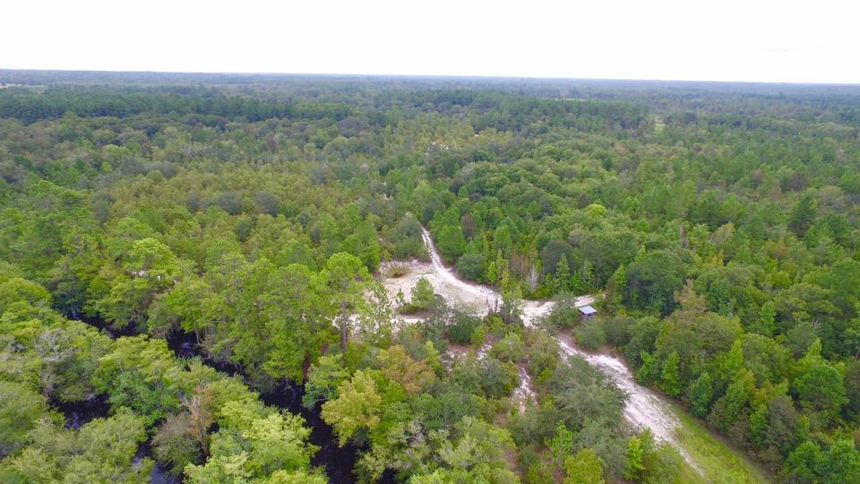 435 Acres Satilla River Bluff Tract image