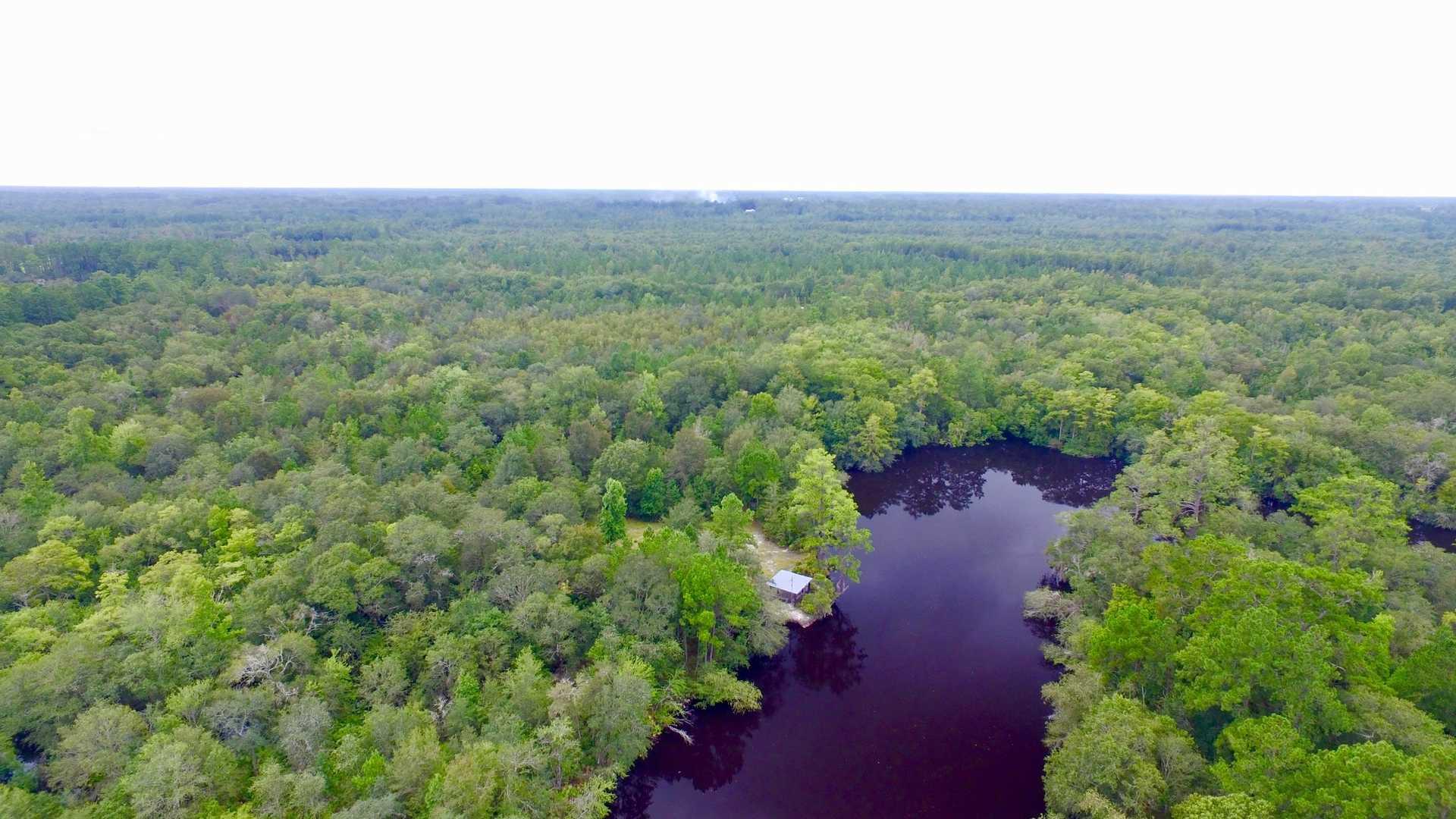 870 Acre Satilla River Bluff Reserve  image