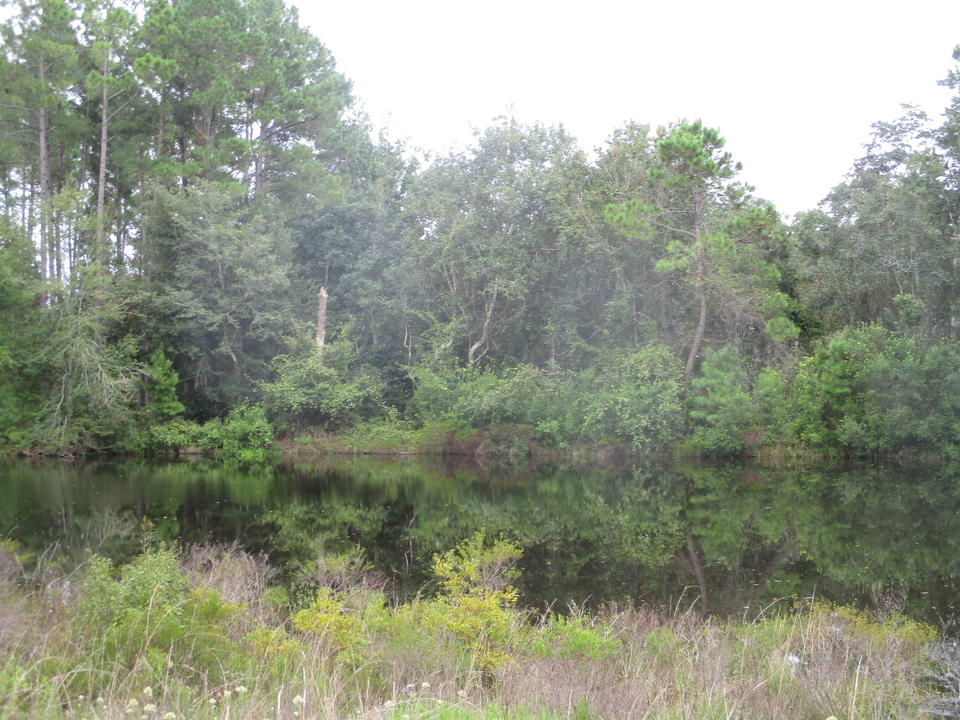 49+ Acres Loblolly Pine Tract  main image