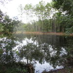 49+ Acres Loblolly Pine Tract  thumbnail image