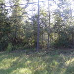 40 Acres Available, Tank Rd Community thumbnail image