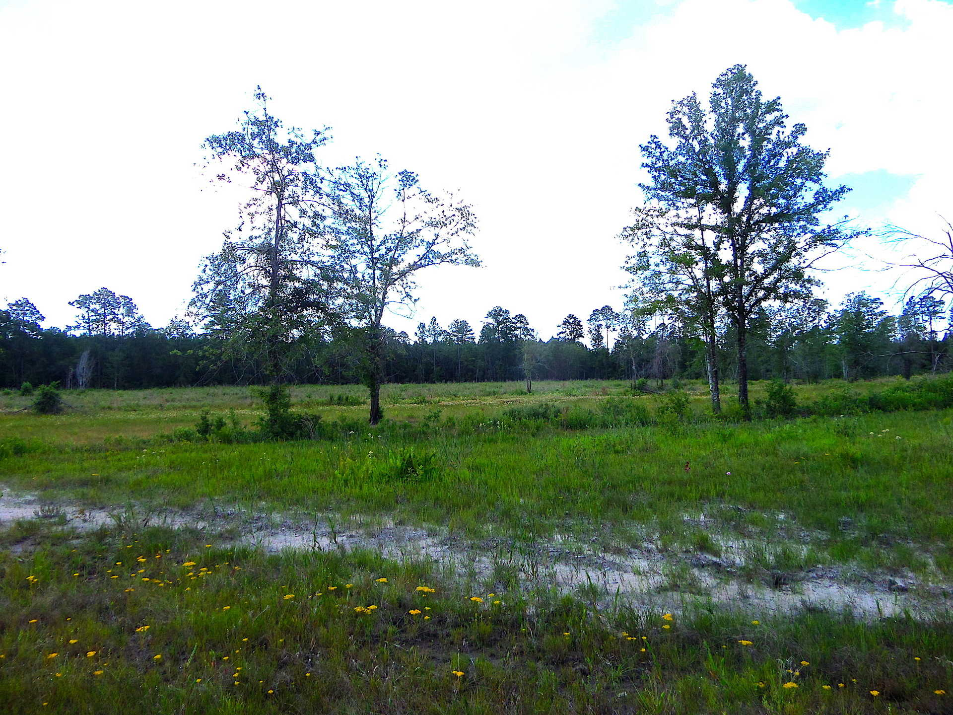 Secluded Recreational Tract Includes Home with Country Life Appeal image