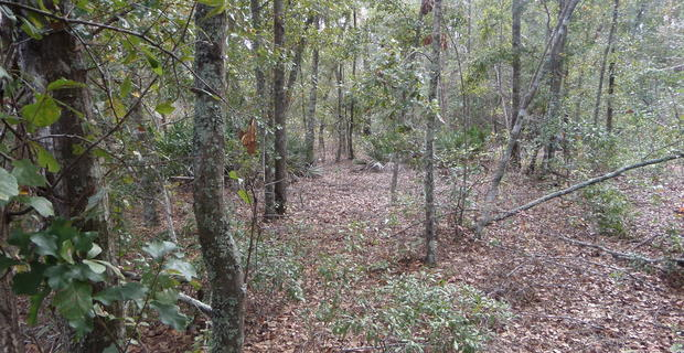 54 Acre Prime Hunting Tract in Long County image