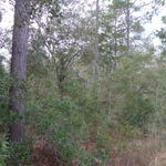 54 Acre Prime Hunting Tract in Long County thumbnail image