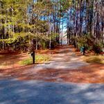 111 Pine Oak thumbnail image
