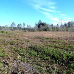 Homesite, Pastureland, MORE located near Odum, GA thumbnail image