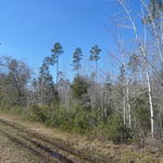 Unrestricted Land Near Gardi Community thumbnail image