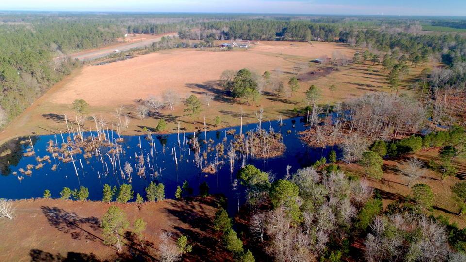 Idyllic 38 Acre Gentleman Farm in Screven, GA main image