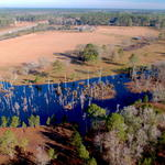 Idyllic 38 Acre Gentleman Farm in Screven, GA thumbnail image