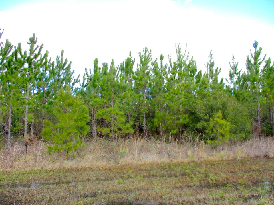 25 Acres of Undeveloped Land Offers Many Possibilities main image